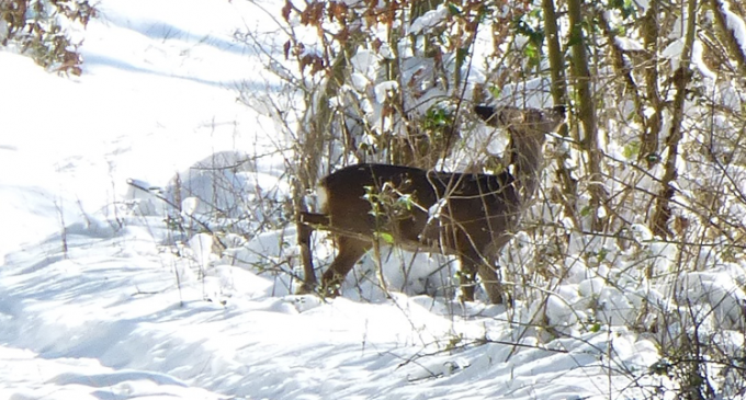 Winterzeit in Oedingen – Auf Futtersuche…