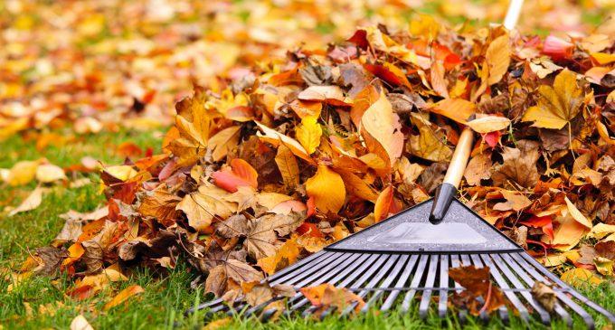 Dorfreinigungsaktion zum Herbst am 28. Oktober