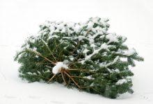 Bild von Weihnachtsbäume werden eingesammelt